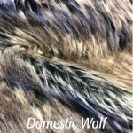 Domestic Wolf - Product Image