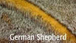 German Shepherd - Product Image